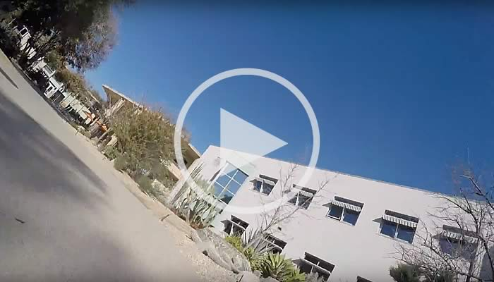 A Dog's Eye View of Pitzer