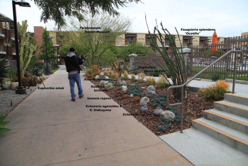 Phase I, area north of the Gold Student Center pool