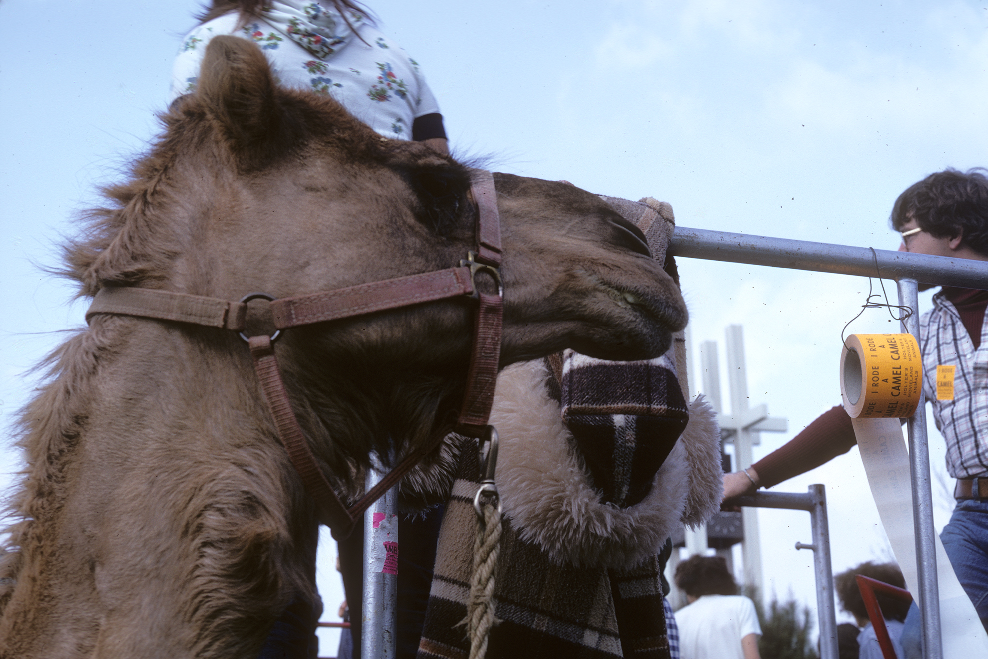 1975 - Camel rides with the Brant clock tower in the background.