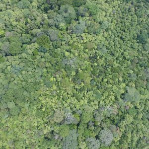 Aerial photo of trees in a Costa Rican rain forest.