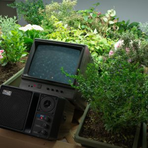 Close-up of video monitor and plants in the Nichols Gallery.