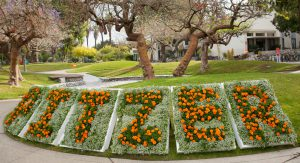 Pitzer College flowers