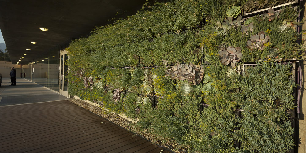 Succulent green wall, West Hall