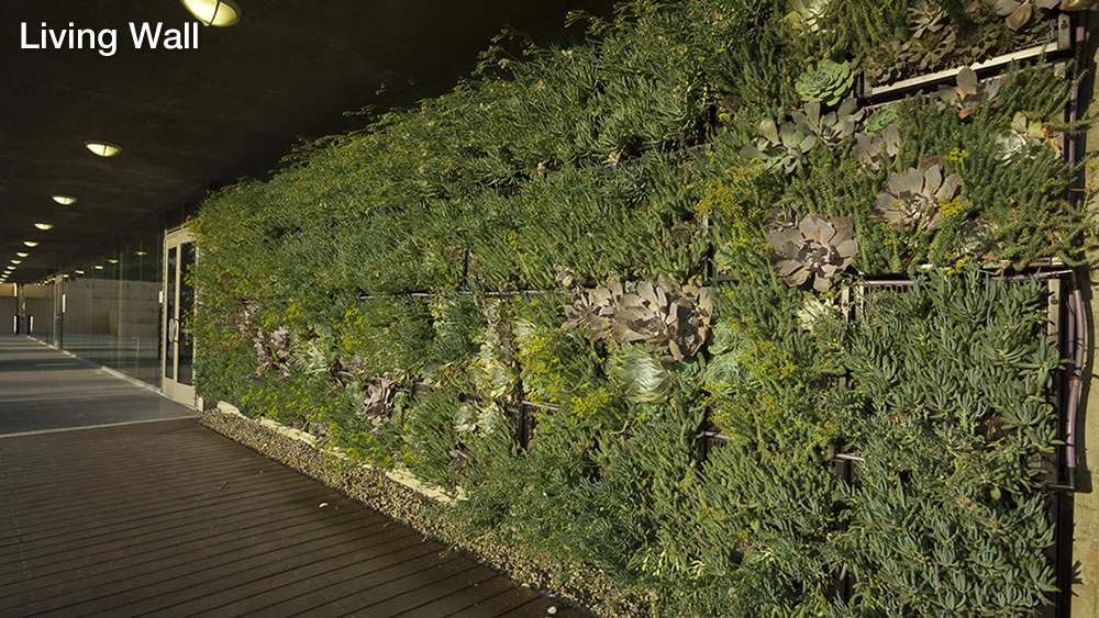 Living Wall on the west wall of West Hall. [Sustainable Sites (SS) Credits 6.1, 6.2 and 7.2]