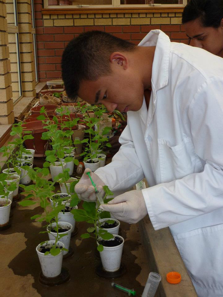 Students engineer a plant virus to mimic human & animal viruses.